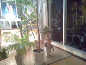 自宅では、季節に関係なく、窓やドアーはすべて全開し、外の新鮮な空気を循環させています。