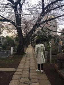 東京都内、2018年3月、桜の季節にて。